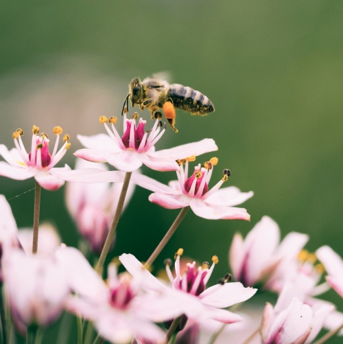 Costa Rica Just Granted Bees and Trees Citizenship
