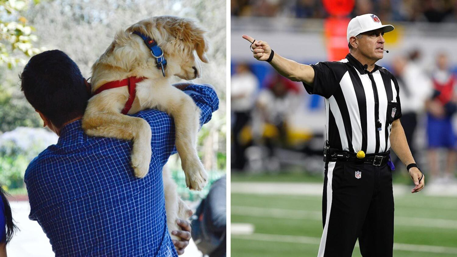 This NFL Referee Is Rescuing Animals During Lockdown