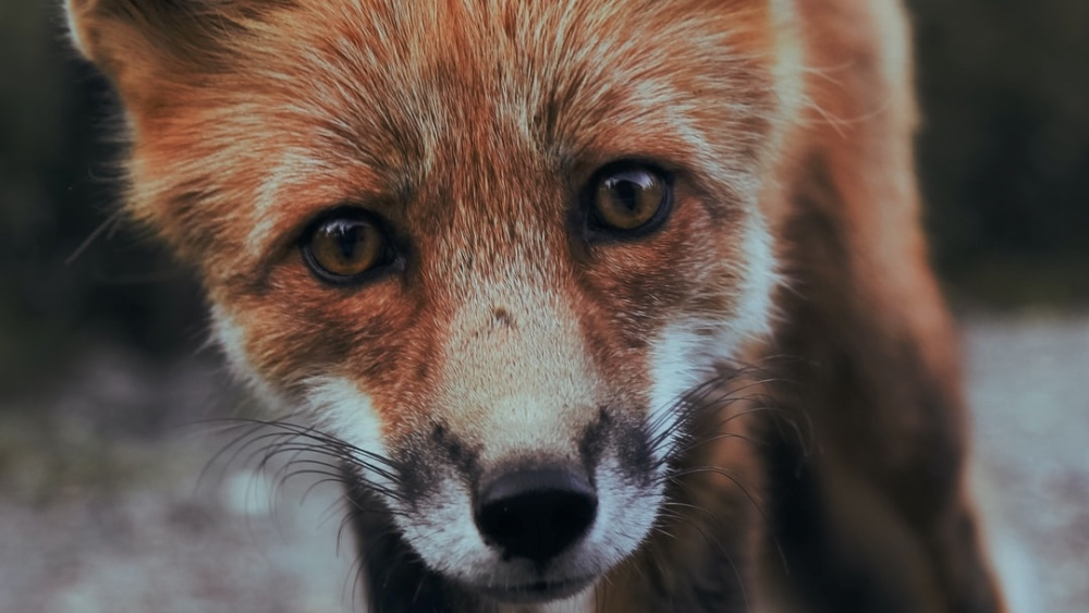 Wildlife Killing Contests Are Now Banned In Colorado