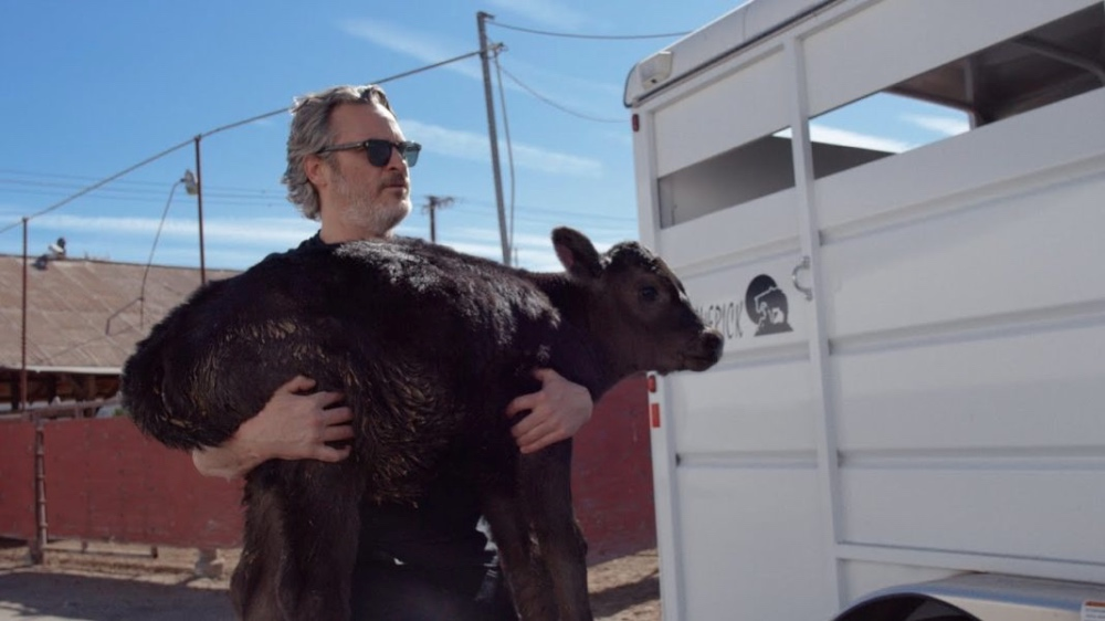 Joaquin Phoenix: Adopt a Cow for Mother's Day