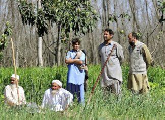Pakistan Just Hired 63,000 People to Plant 10 Billion Trees