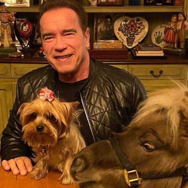Arnold Schwarzenegger Just Threw a Birthday Party for His Donkey