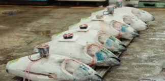 11% of Ghana's Coronavirus Infections Originate From a Tuna Factory
