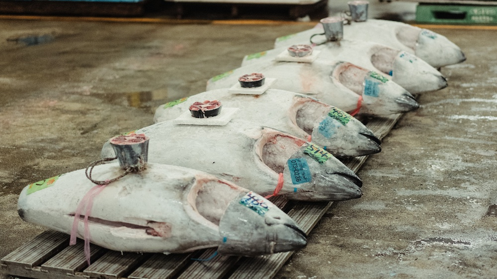 11% of Ghana's Coronavirus Infections Originate From a Tuna Factory