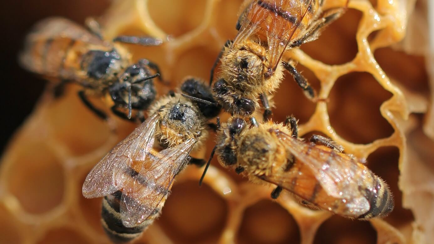 Bees Are Thriving As Pollution Levels Drop