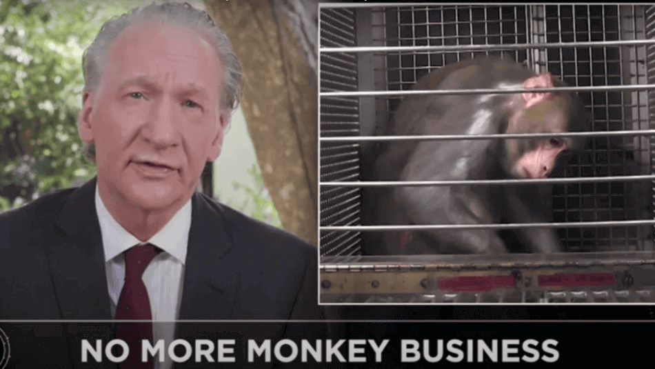 Bill Maher: The NIH Uses Taxpayer Money to Torture Monkeys