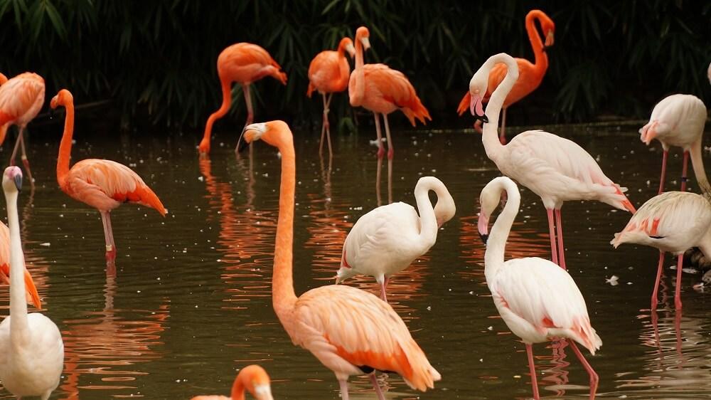 Over 100,000 Flamingos Take Over Mumbai During Lockdown
