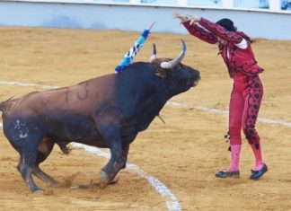 Bogota Moves to Ban Bullfighting In Colombia's Capital