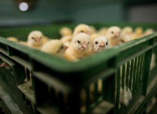 Jo-Anne McArthur Exposes Factory Farms In New Book