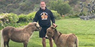 Arnold Schwarzenegger Shares His Workouts With His Donkey LuLu