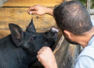 What Are Ag-Gag Laws?