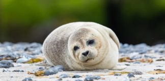 Scotland Just Banned the Fishing Industry From Shooting Seals
