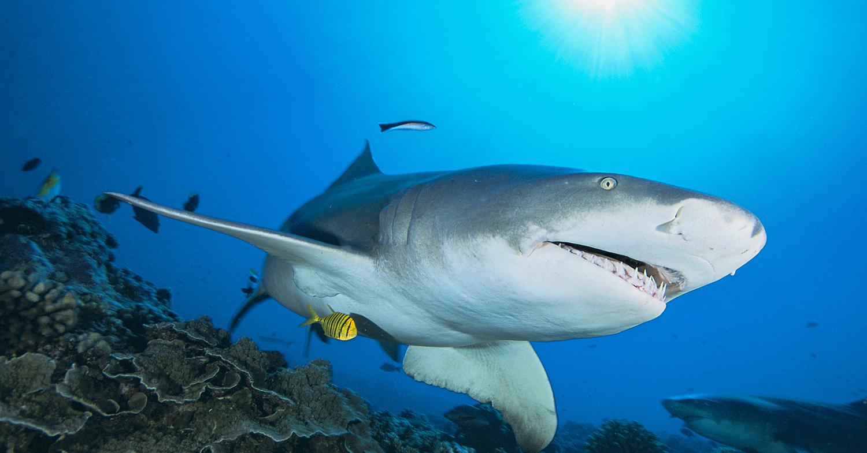 7 Things SHARK WEEK Gets Right And Terribly WRONG