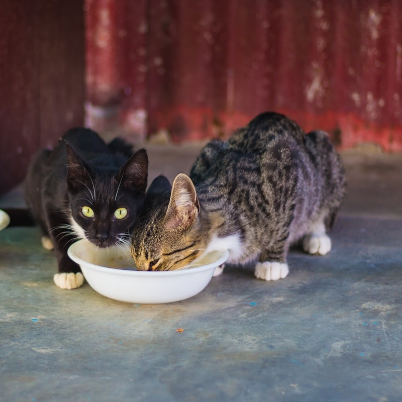 Is a Vegan Diet Safe for Cats? What Every Pet Lover Needs to Know