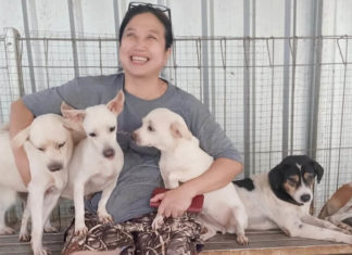 COVID Frontline Doctor Has Rescued 1,000 Abandoned Dogs