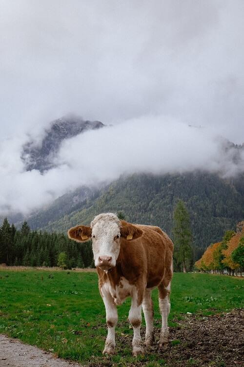 Is Humane Organic Meat a Myth?