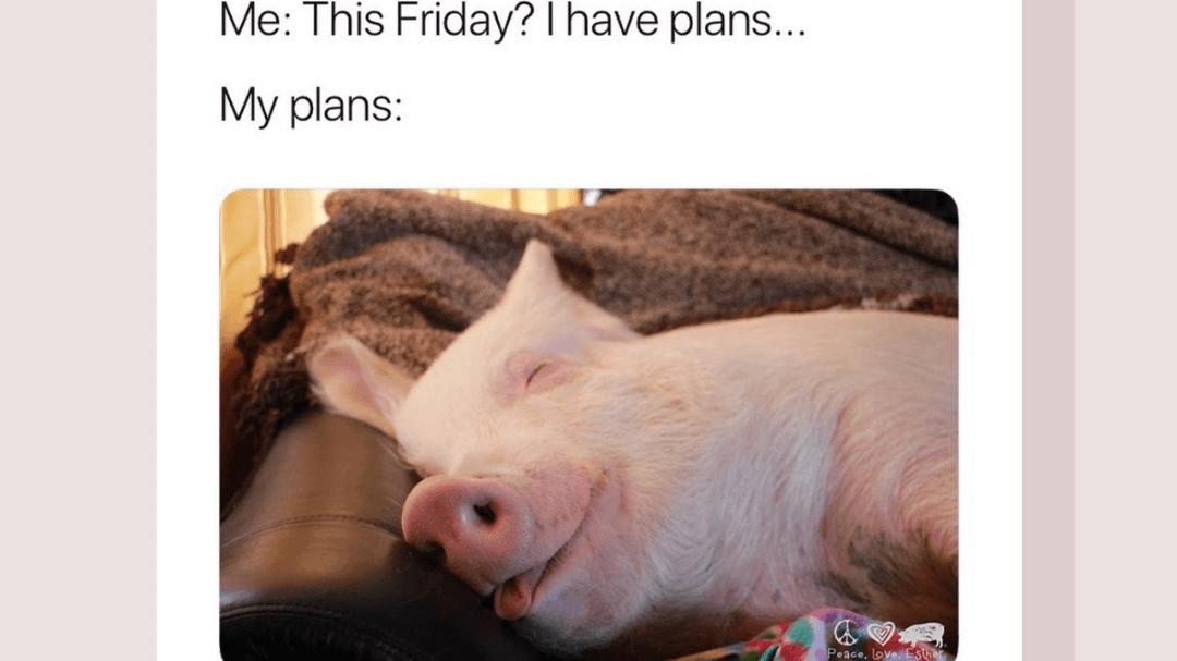 23 Vegan Memes That'll Make You Say 'Same'