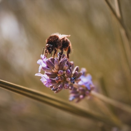 No Bees, No Food: It's That Simple