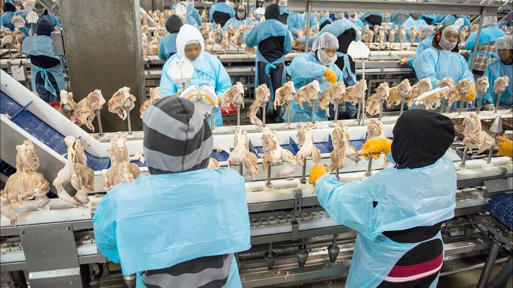 Germany Moves to Protect Slaughterhouse Workers From Abuse
