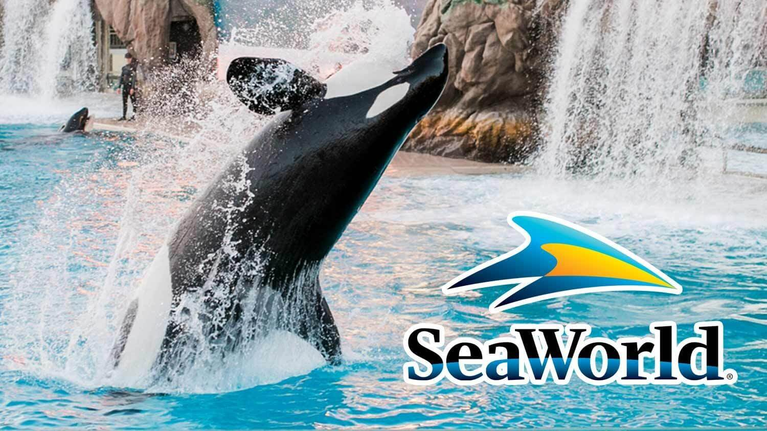 SeaWorld's Revenue Has Dropped 95% From 2019