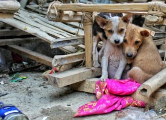 This Spanish Town Just Passed One of the Strictest No-Kill Policies for Stray Animals