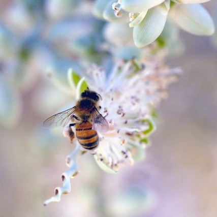How Taking Care of Wild Bees Protects Our Global Food Supply