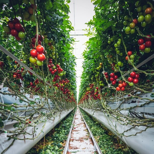 Is Hydroponic Farming Actually Sustainable?