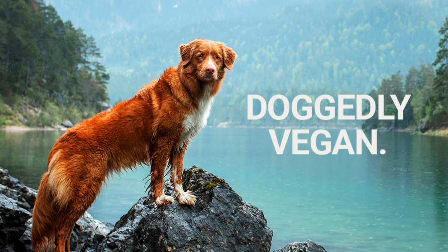 The Truth About Plant-Based Dog Food