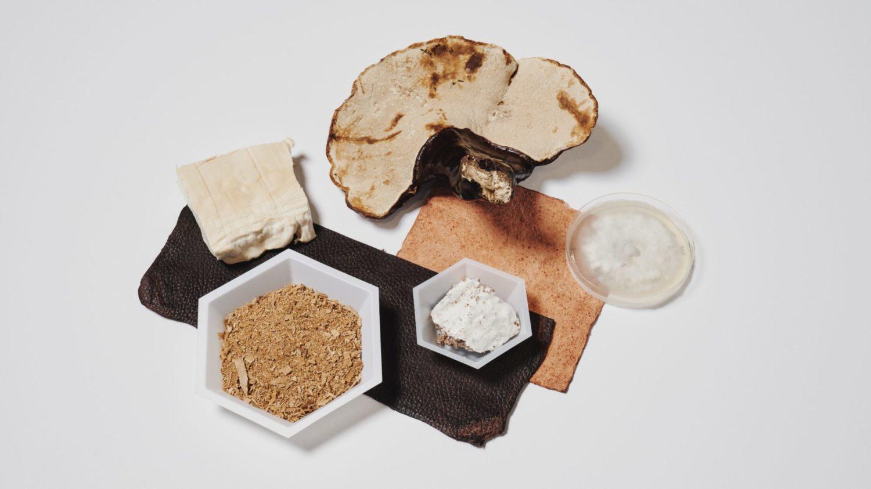 Adidas, Stella McCartney, Lululemon to Use Vegan Leather Made From Mushrooms