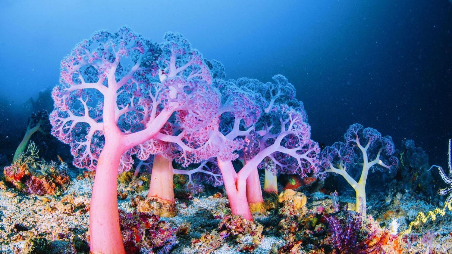 How Deep-Sea Coral Reefs Protect Marine Biodiversity