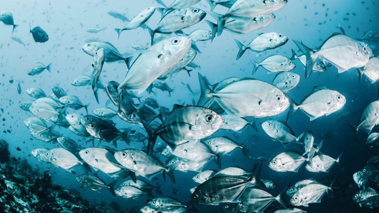 Do Fish Feel Pain? New Welfare Standards Focus on Aquatic Animals.