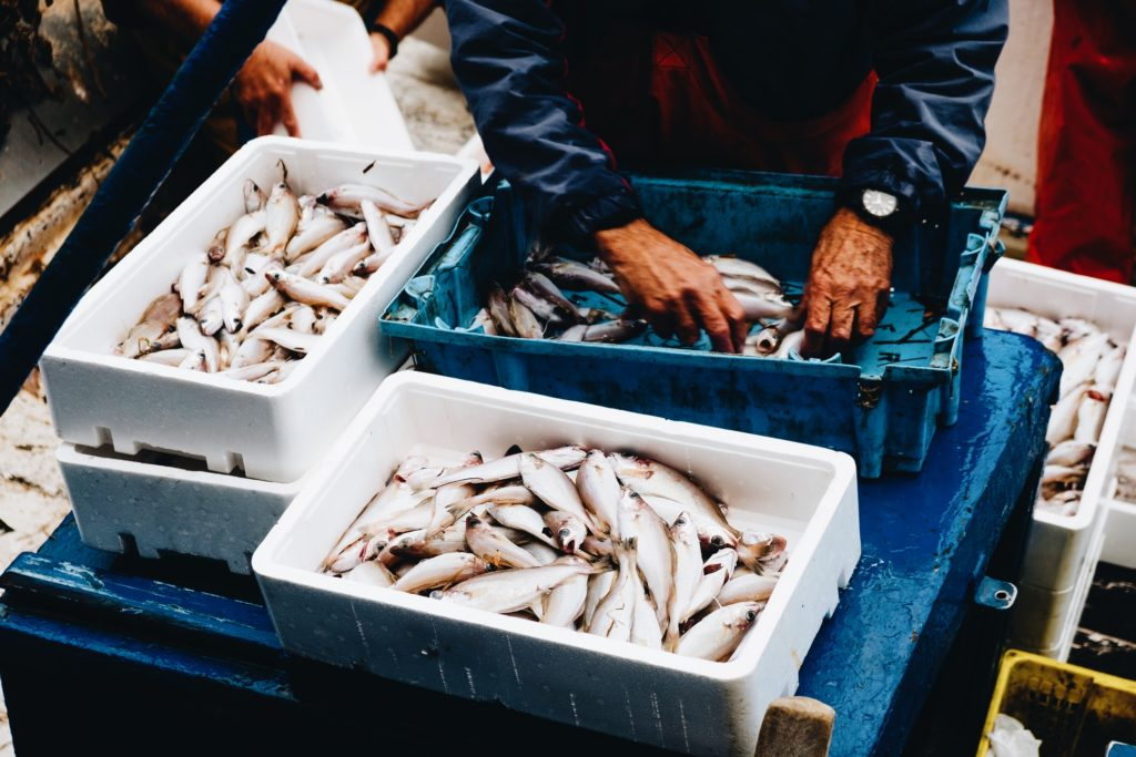 Do Fish Feel Pain? New Welfare Standards Set the Record Straight.