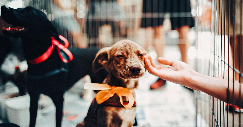 New York Senate Just Banned Pet Store Animal Sales