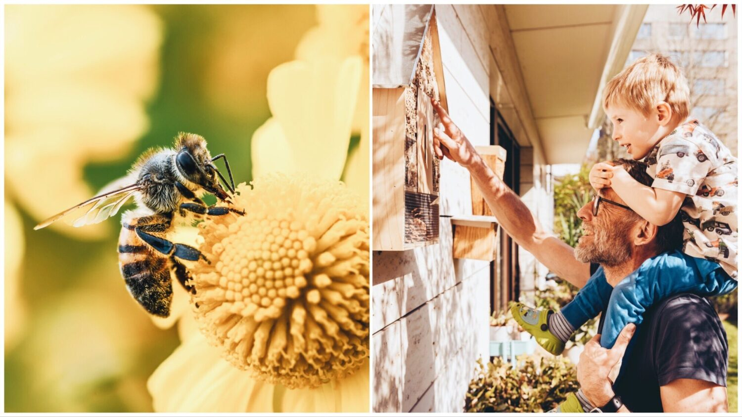 Mini Hotels, Bus Shelters, and 5 Other Initiatives Saving the Bees