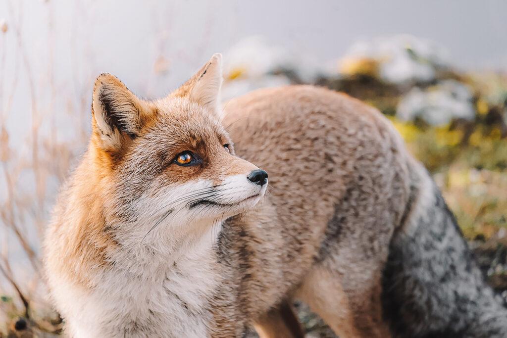 Israel Bans Fur Sales, Leading the World In Landmark Legislation