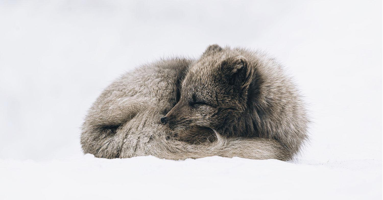 Estonia Becomes 14th European Nation to Ban Fur Farming