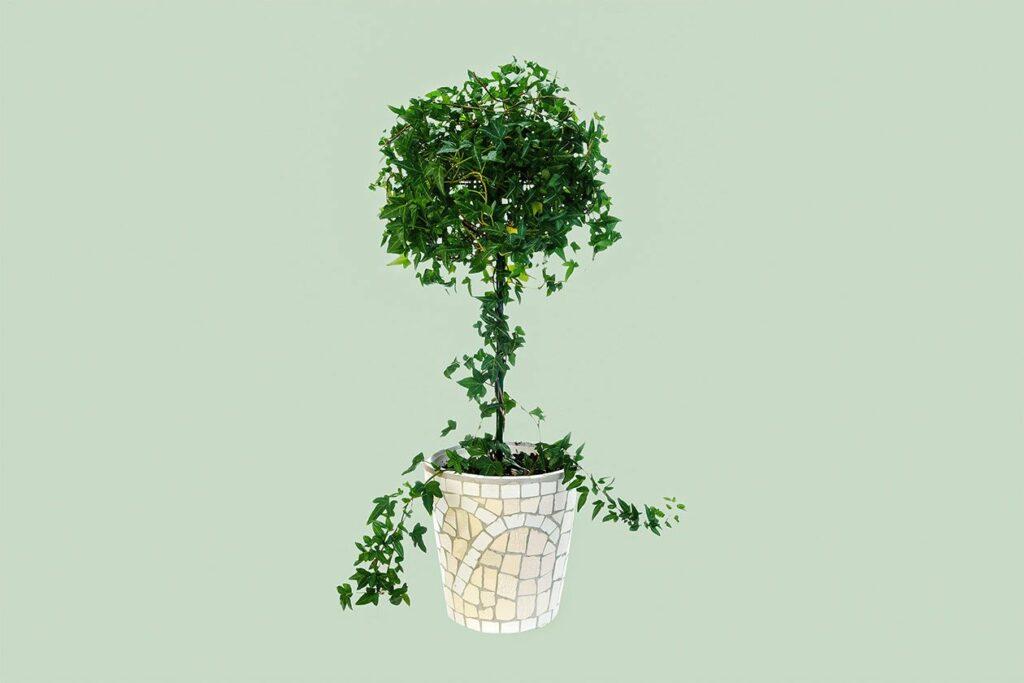 A homemade topiary