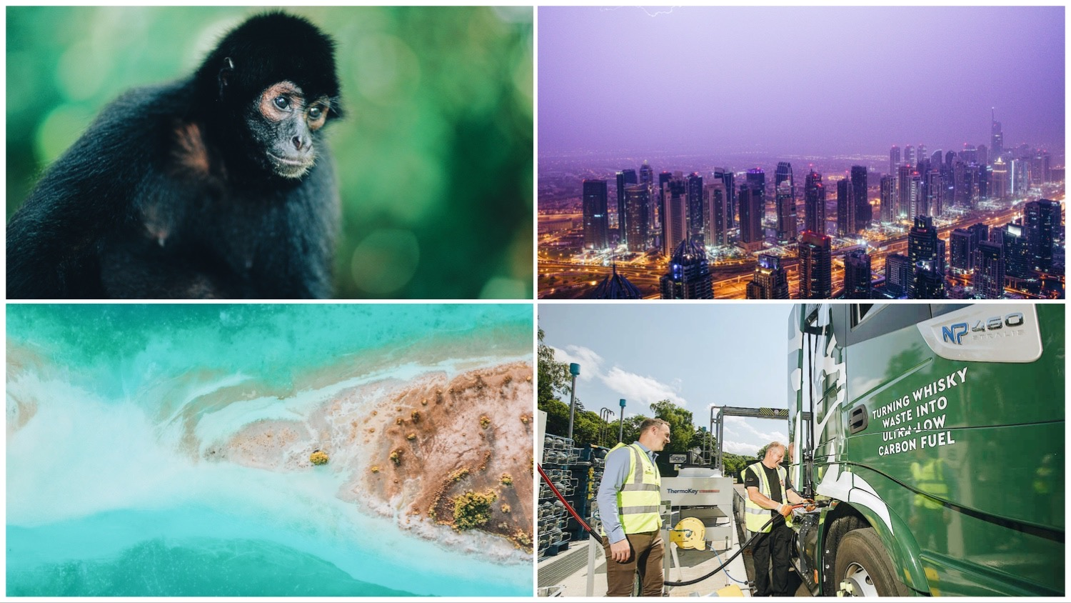 Clockwise: photo of spider monkey, the Dubai skyline (which could be cooled by fake rain), a reef from overhead, and Glenfiddich workers.