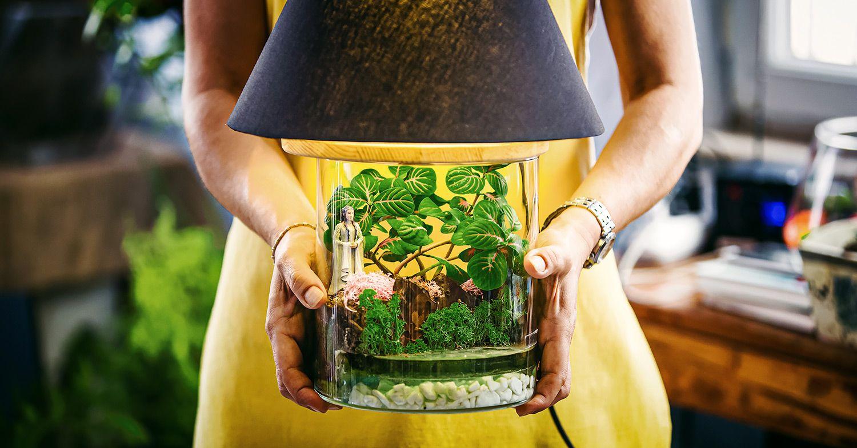 A DIY terrarium