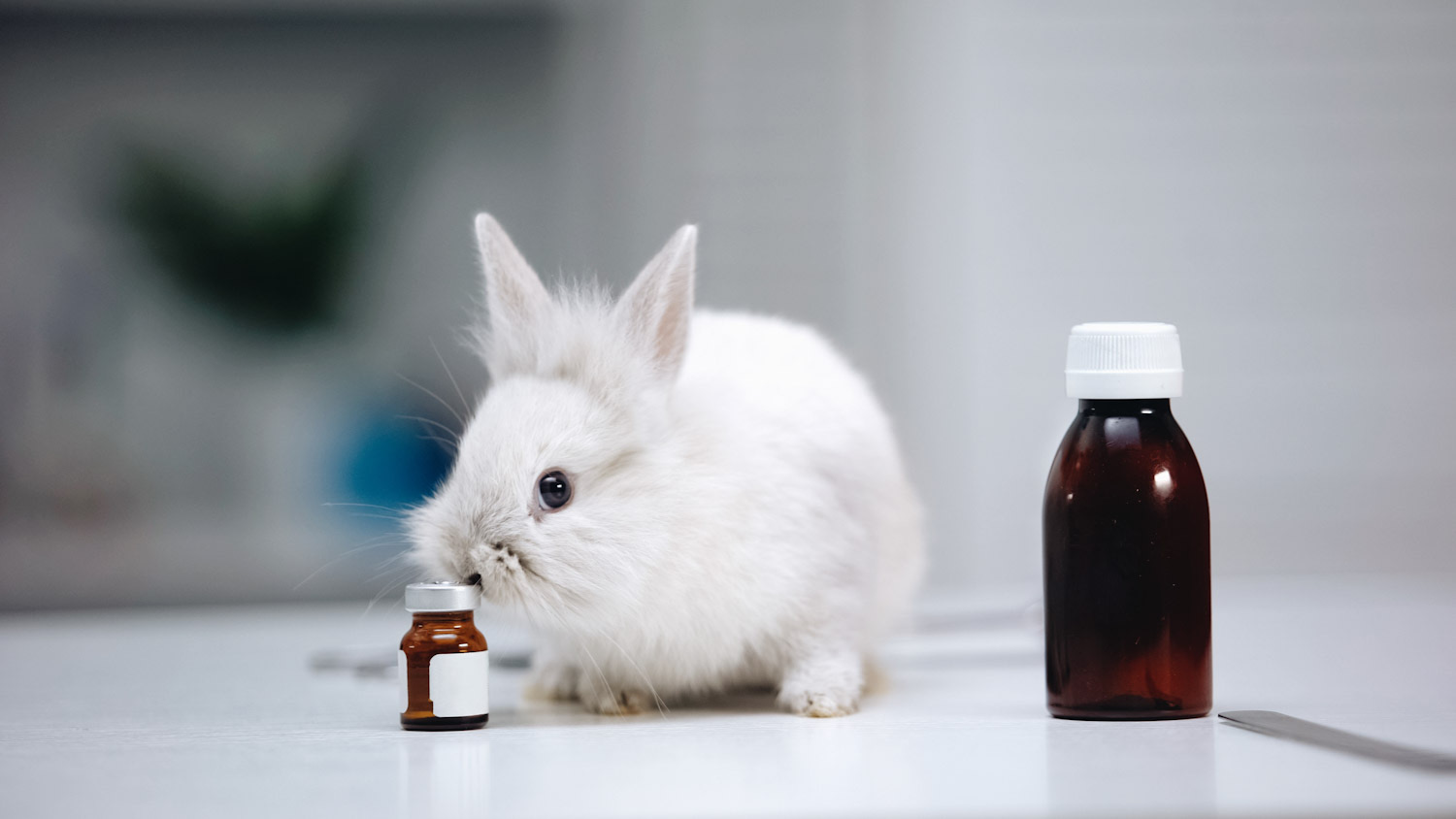 Photo shows a small white rabbit in a sterile lab setting, next to two small medicinal-looking bottles. The EU just voted overwhelmingly in favor of an end to animal experiments.