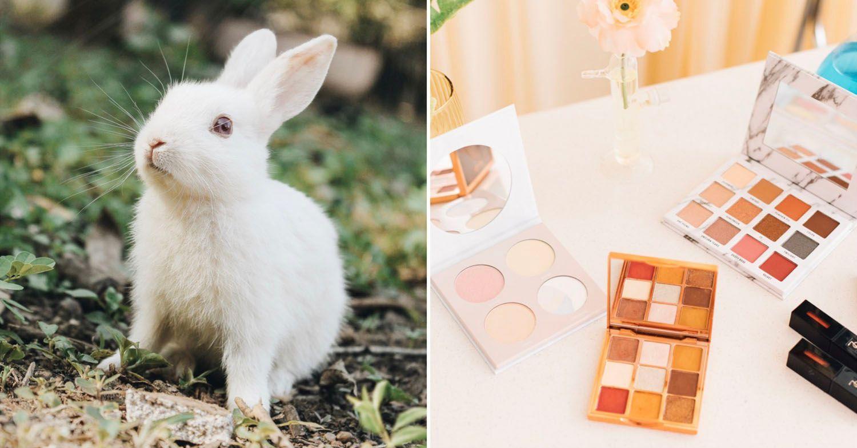 Photo of a rabbit and makeup.