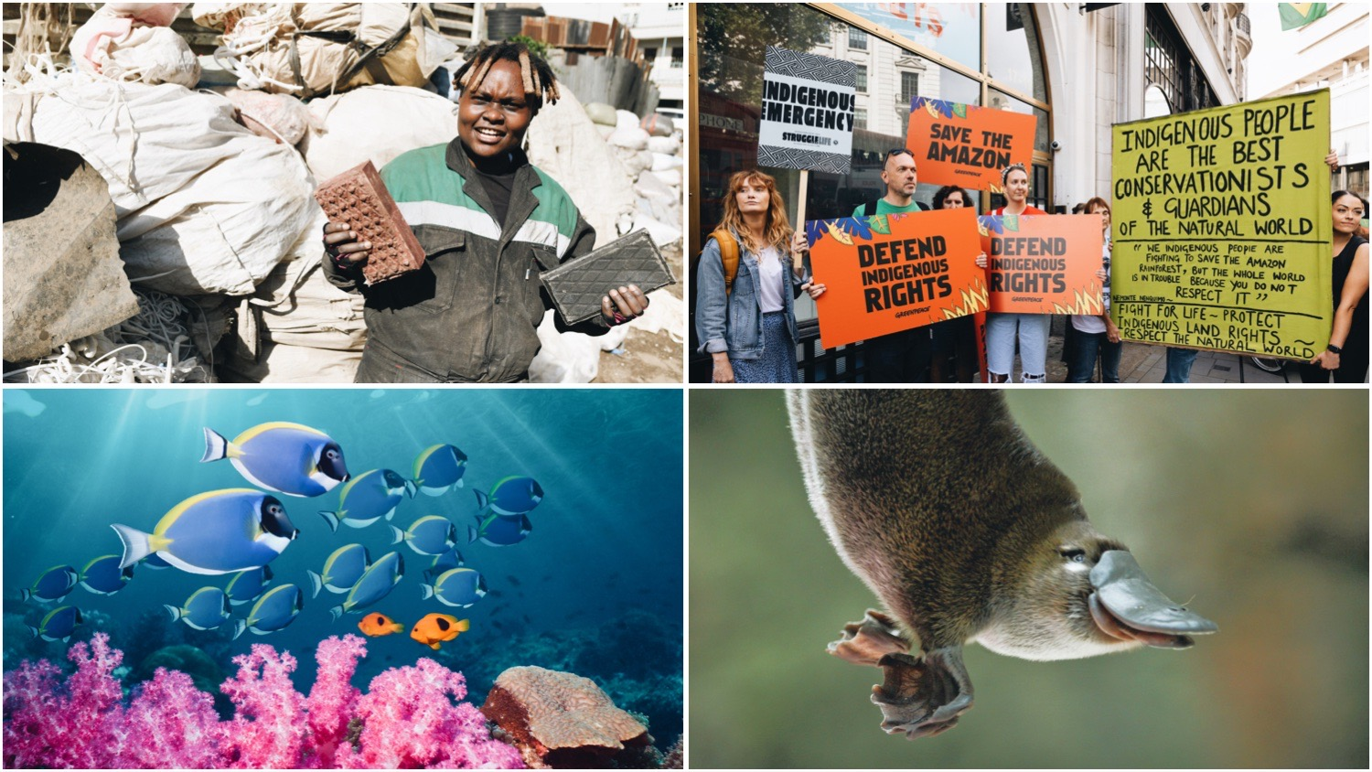 Clockwise from top left. Photos show Nzambi Matee (inventor of innovative plastic pollution solutions), XR protestors demonstrating for Indigenous rights, sealife swimming around coral, and a young platypus.